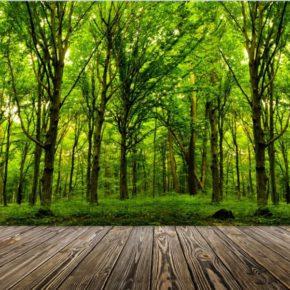 Appel à projets monumental en forêt