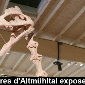 Les vestiges d'un nouveau dinosaure exposé en Allemagne